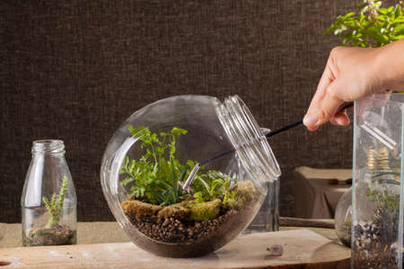 terrarium: Terrarium, a hand with a tweezer making of bottle terrarium plant green house.