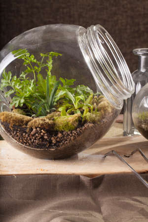 Terrarium, a hand with a tweezer making of bottle terrarium plant green house.