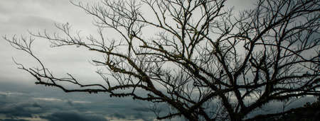 dampness: cloudy day, dampness plant branches at the top of mountain view with fog on cloudy day,Thailand Stock Photo