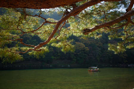 A sightseeing boat with passengers rowing in Katsura River with red maple tree, Kyoto, Japan
