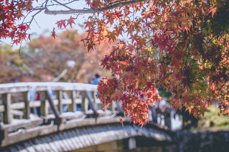 Arashiyama, red maple leaves blooming at Arashiyama in Autumn with a nice scenery, Kyoto, Japan 写真素材