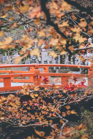 ponte giapponese: Ponte giapponese, giallo e rosso acero albero in fiore cespuglio in autunno con stile tradizionale rosso ponte di Okunoin mausoleo, Koyasan, Giappone Archivio Fotografico