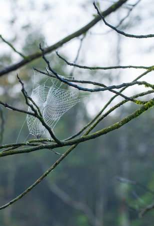 humid: spider web, the white spider web attached on humid tree branch in rain forest nature, Thailand Stock Photo