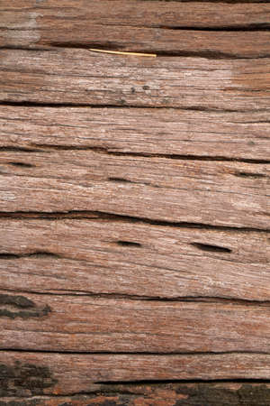 humidity: wood texture, real trunk of wood texture with humidity moss and lichen in nature