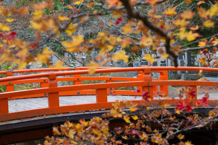 ponte giapponese: Japanese Bridge,yellow and red maple bush tree blossom in autumn with traditional style red bridge of Okunoin mausoleum, Koyasan, Japan Archivio Fotografico