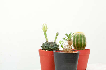 put together: cactus, group of various type cactus and succulent Euphorbia put together in house garden