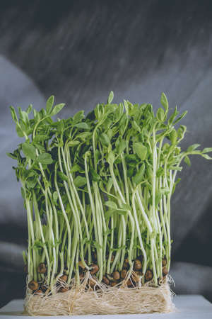 plating: green pea sprout, young green pea sprout with seed ready to eat in plating pot