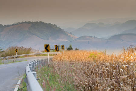 road side: country road side, curve road along corn field and fence with mountain scenery in country side, Thailand Stock Photo