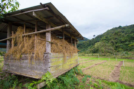 barnyard: wheat storehouse, a home made storehouse containing picked wheat in country side, Thailand