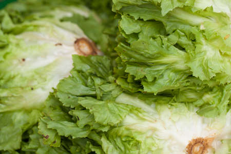 close up texture of Napa cabbage or Chinese cabbage put together in market Standard-Bild
