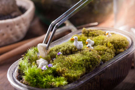 A terrarium garden scene in a bowl decorated with duck family minature toy using stainless forceps