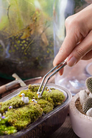 vivarium: A terrarium garden scene in a bowl decorated with duck family minature toy using stainless forceps