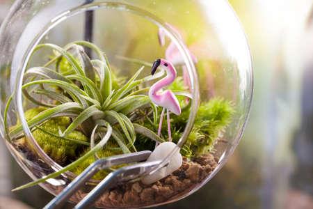 Una escena terrario jardín en forma de bola de cristal con Tillandsia, guijarros y juguete flamenco y el interior inoxidable pinzas para decorar Foto de archivo
