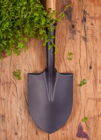 coated: gardens black shovel made from coated steel put vertically on wood background with small fern plant.