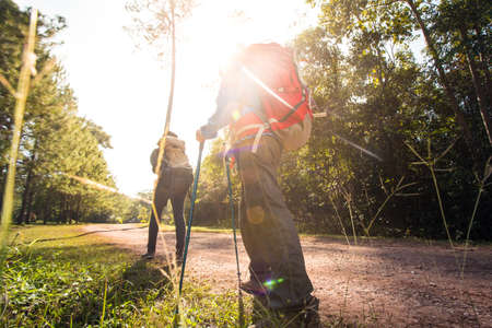 Two woman trekking along the forest pathway with trekking pole in morning sunlight