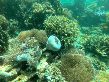 Bruer island in Myanmar, Beautiful coral in the sea. Stock Photo - 97353314