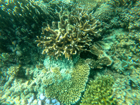 Bruer island in Myanmar, Beautiful coral in the sea. Stock Photo - 97677263