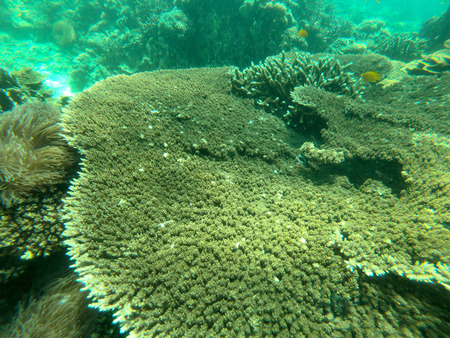 Bruer island in Myanmar, Beautiful coral in the sea. Stock Photo - 97368734