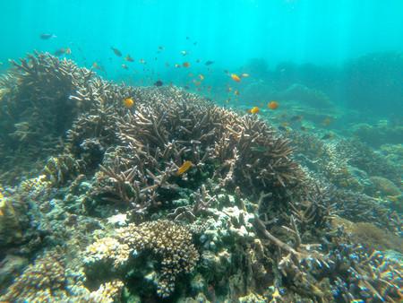 Bruer island in Myanmar, Beautiful coral in the sea. Stock Photo