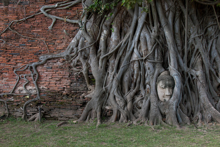 Buddha Head statue trapped in roots of Bodhi Tree at Wat Mahathat, Ayutthaya historical park, Thailand. Stock Photo - 105393246