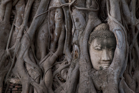 Buddha head in the Bodhi tree roots at Wat Mahathat, Ayuttaya province, Thailand.