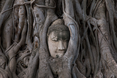 Buddha Head statue trapped in roots of Bodhi Tree at Wat Mahathat, Ayutthaya historical park, Thailand.