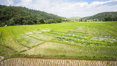 Rice fields on terraced of Meakaluanguang, Mae Chaem, Chiang Mai, Thailand - Vibrant