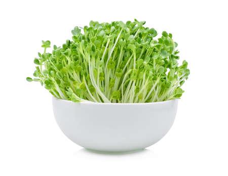 Growing microgreens su sfondo bianco