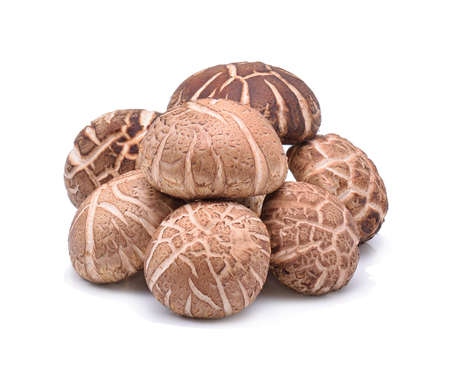 Shiitake Mushrooms on white background