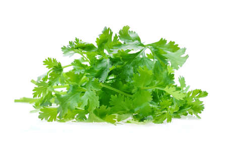 coriander on white
