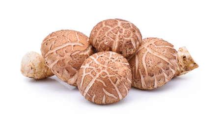 Shiitake Mushrooms on white background Stock Photo - 61885046