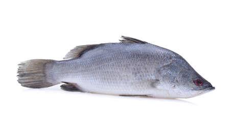 zeebaars of barramundi vis op een witte achtergrond