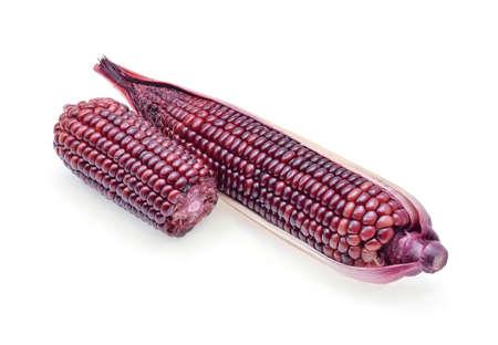 ripe purple corn isolate on white background