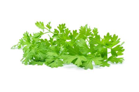 culantro: El cilantro aislados en blanco