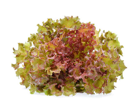 Red oak lettuce with water drops on white background.