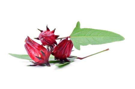 Hibiscus sabdariffa or roselle fruits on white background.