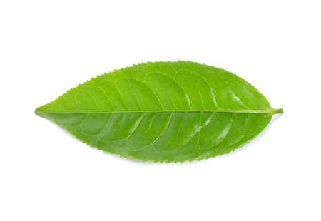 Hoja de té verde aislada sobre fondo blanco Foto de archivo