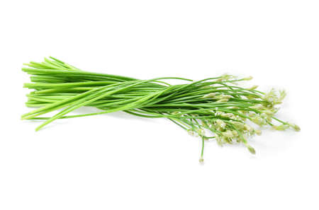 alliaceae: Wet Chinese chives on white background.