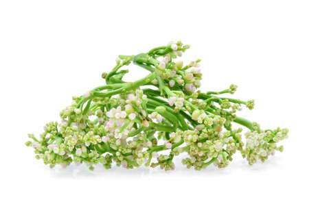 Ceylon Spinach isolated on white background