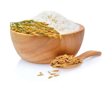 rice plants, grains of Thai jasmine rice in wood bowl on white background