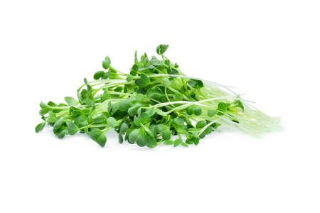 Groeiende microgreens op een witte achtergrond