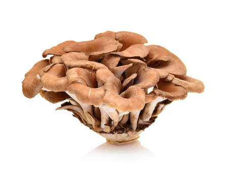 maitake mushrooms on white background Stok Fotoğraf