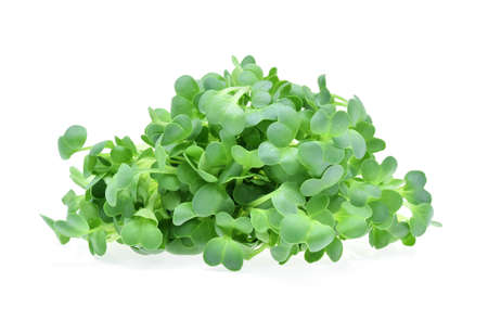 heap of alfalfa sprouts on white background Stock Photo