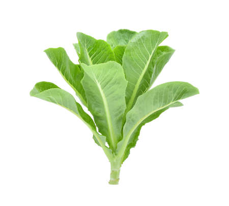 bunch of hearts: fresh baby cos (lettuce) on white background