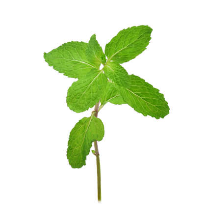 Fresh raw mint leaves isolated on white background Stock Photo