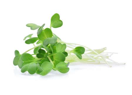 hoop alfalfa spruiten geïsoleerd op witte achtergrond Stockfoto
