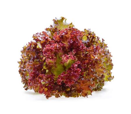 Red oak lettuce on white background.