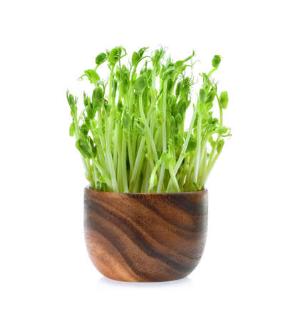 Snow pea sprouts on white background