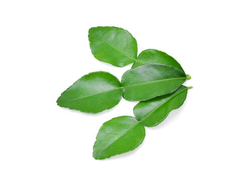 Kaffir lime leaf isolated on white background