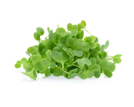 Growing microgreens isolated on white background